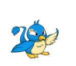 blue pteri